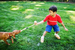 Boy playing tug of war with dog